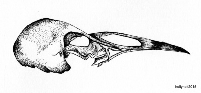 pointilist bird skull drawing by holly holt