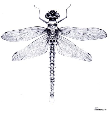 dragonfly with human bones in ballpoint pen by holly holt